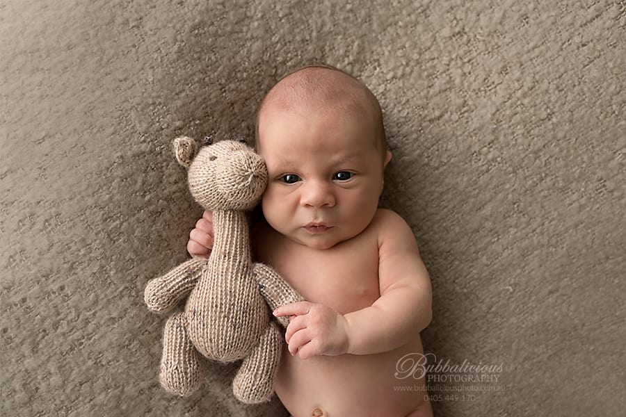Newborn Photography - Sunshine Coast Gympie Region Premium Photographer - Awake Newborn with teddy bear