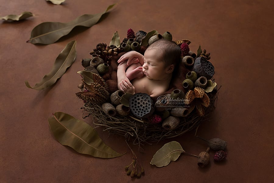 Newborn posed among gum nuts and gum leaves - Sunshine Coast Gympie Newborn Photographer