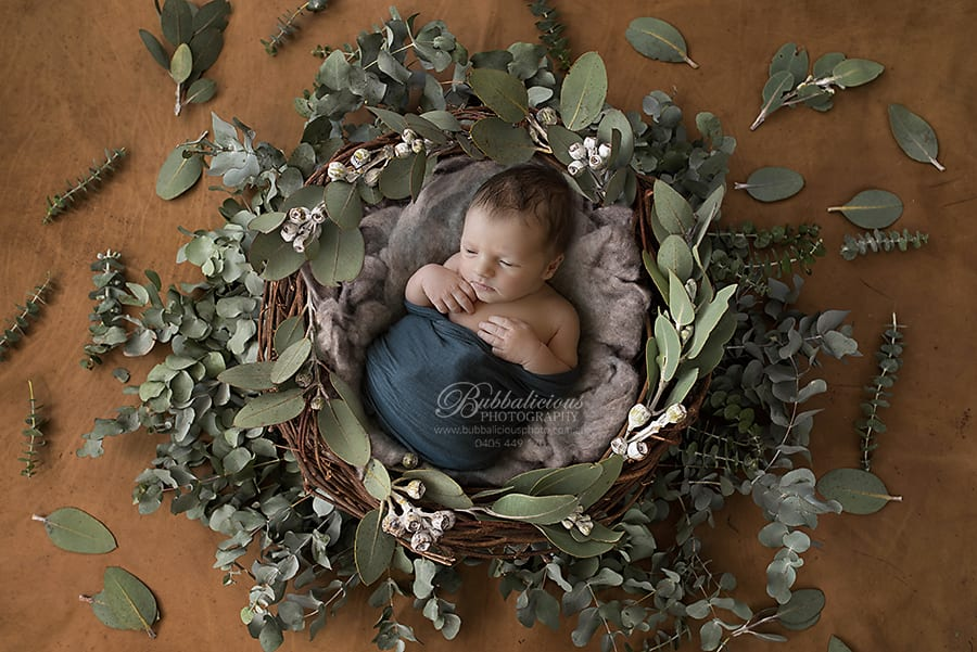 Newborn posed in a nest with eucalypt leaves - Sunshine Coast Gympie Newborn Photographer